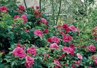Gartenpflanzen mit Rabatt bestellen