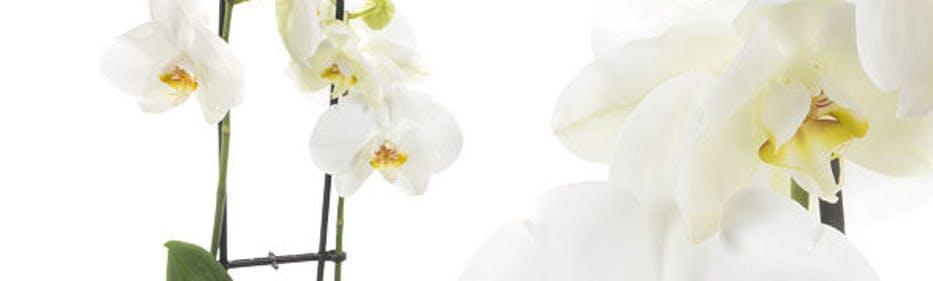 Sparen beim Blumenkauf bei FloraPrima
